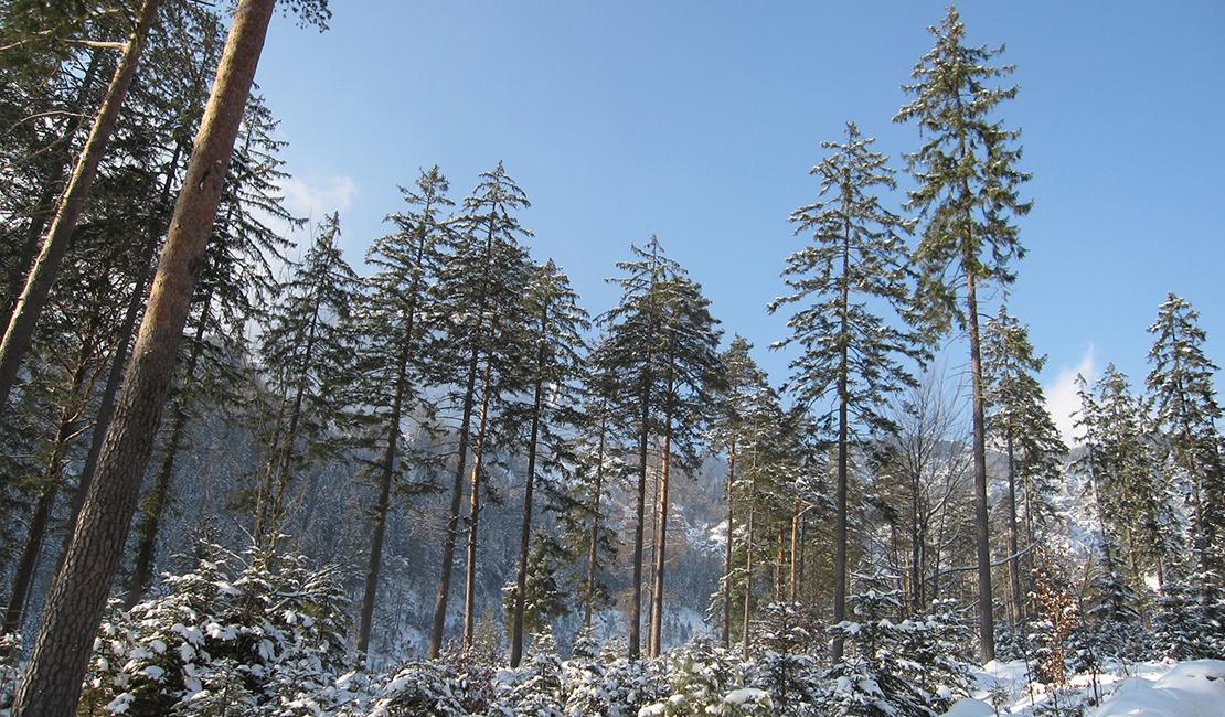Presseaussendung 7. Jahresbilanz: Forst & Jagd Dialog Österreich