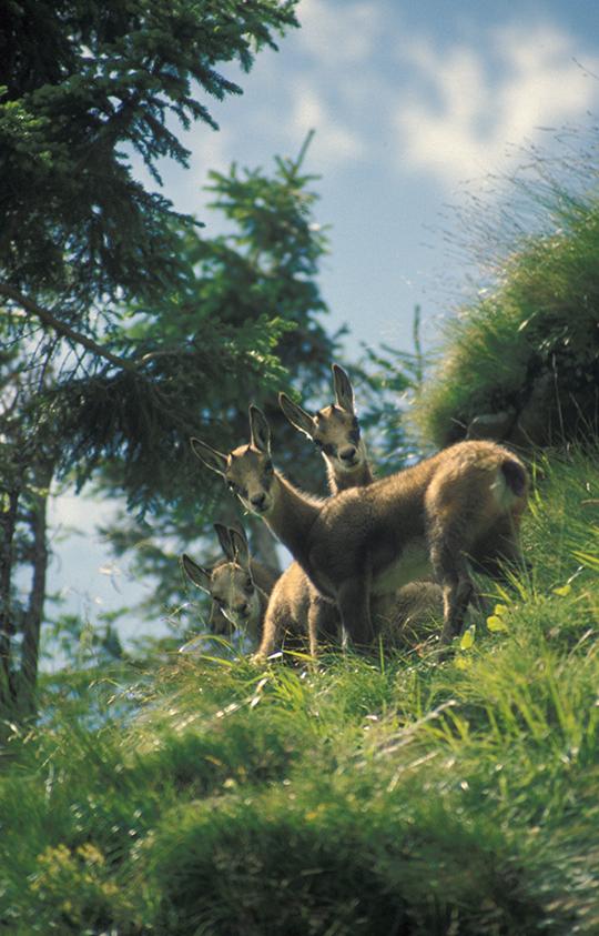 Der Forst & Jagd Dialog, Symbolbild