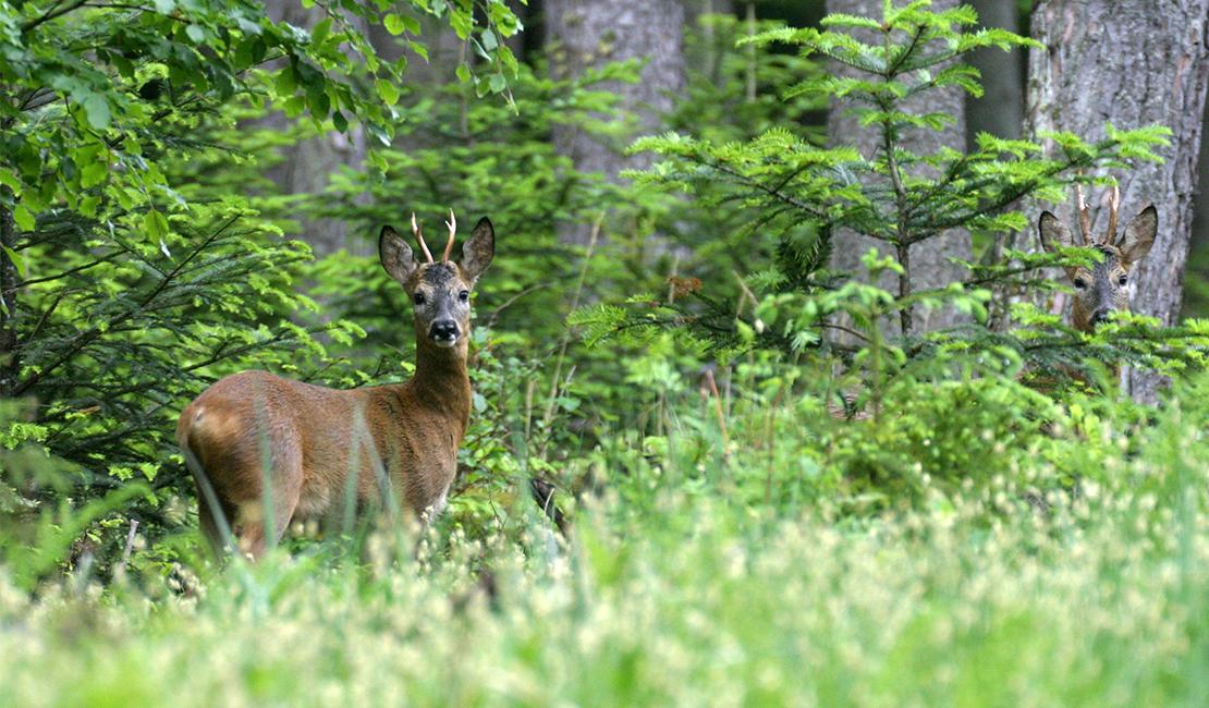 4. Jahresbilanz: Forst & Jagd Dialog in Österreich