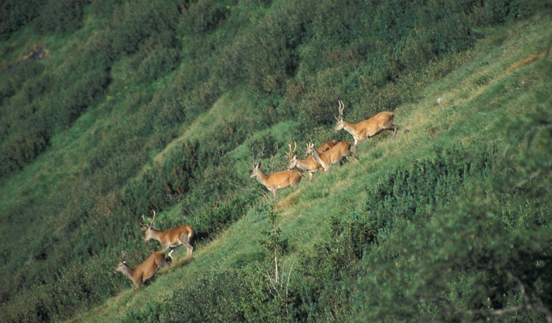 3. Jahresbilanz - Forst & Jagd Dialog in Österreich